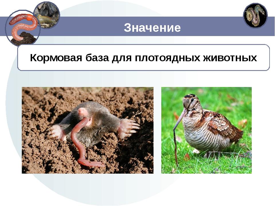 Значение Кормовая база для плотоядных животных