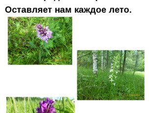 На Земле исчезают цветы. Скаждым годом заметнее это. Меньше радости и красот