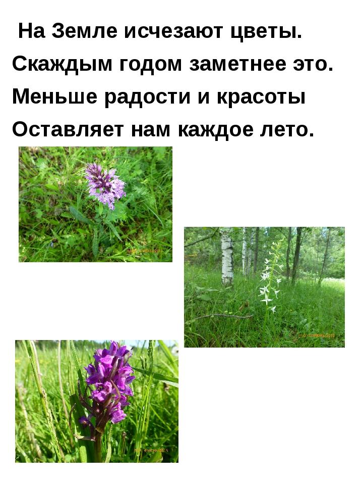 На Земле исчезают цветы. Скаждым годом заметнее это. Меньше радости и красот...