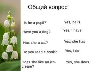 Общий вопрос Is he a pupil?			 Yes, he is Have you a dog? Yes, I have Has she