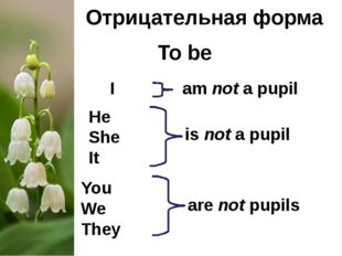 Отрицательная форма To be I He She It You We They am not a pupil are not pupi