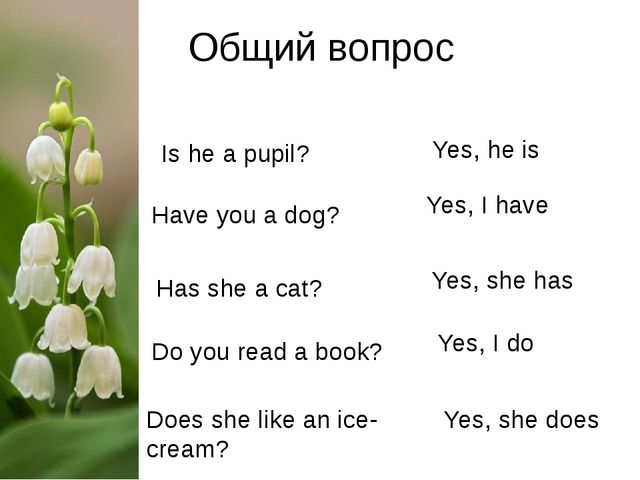 Общий вопрос Is he a pupil?			 Yes, he is Have you a dog? Yes, I have Has she...