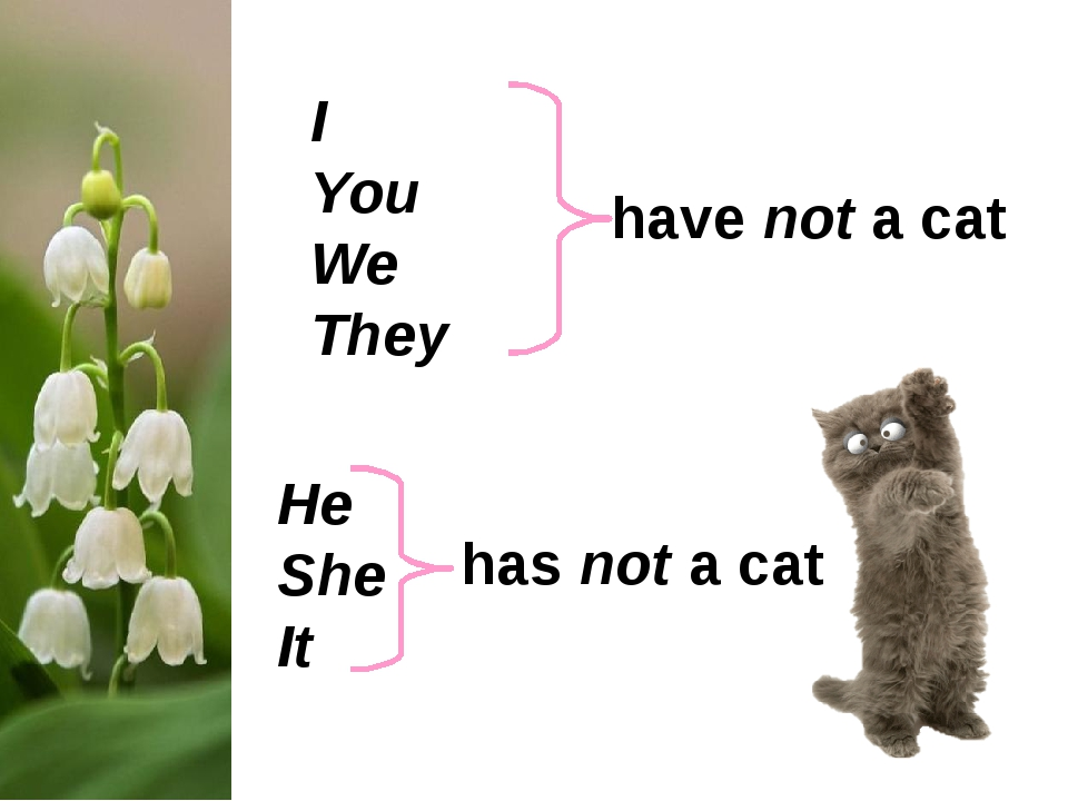 I You We They He She It have not a cat has not a cat