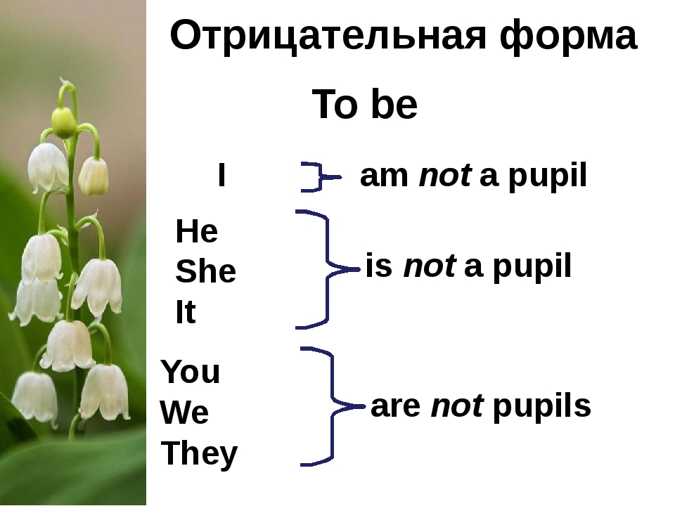 Отрицательная форма To be I He She It You We They am not a pupil are not pupi...