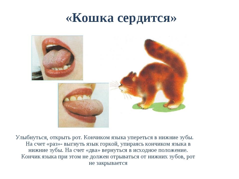 «Кошка сердится» Улыбнуться, открыть рот. Кончиком языка упереться в нижние...