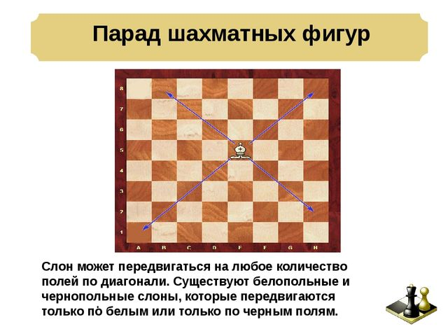 Парад шахматных фигур . Слон может передвигаться на любое количество полей п...