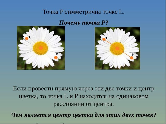 Точка P симметрична точке L. Почему точка P?   Если провести прямую через э...
