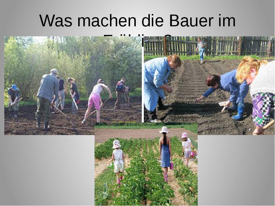 Was machen die Bauer im Frühling?