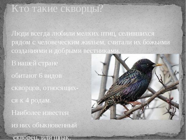 Люди всегда любили мелких птиц, селившихся рядом с человеческим жильем, счита...