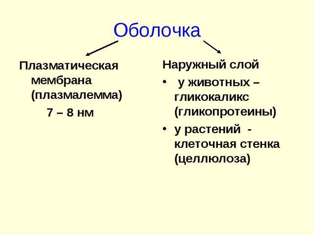 Оболочка Плазматическая мембрана (плазмалемма) 7 – 8 нм Наружный слой у живот...