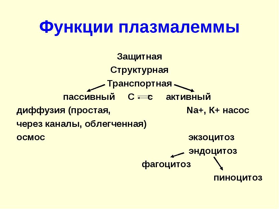 Функции плазмалеммы Защитная Структурная Транспортная пассивный С с активный...