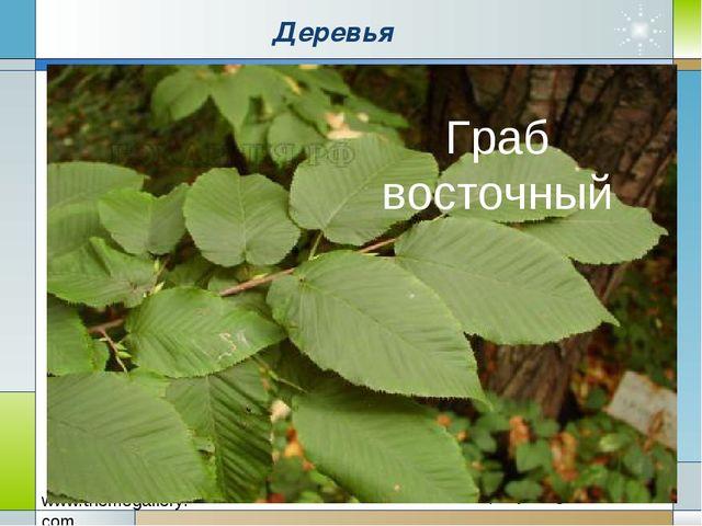Деревья Граб восточный