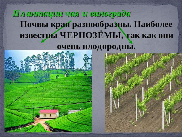 Плантации чая и винограда Почвы края разнообразны. Наиболее известны ЧЕРНОЗЁМ...