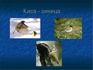 Киса - синица