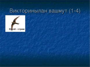 Викторинылан вашмут (1-4) Вÿрзö - стриж