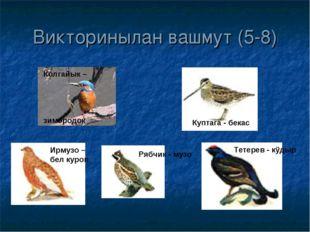 Викторинылан вашмут (5-8) Куптага - бекас Тетерев - кÿдыр Рябчик - музо Ирмуз