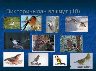 Викторинылан вашмут (10) Куэтазля – чечётка Щегол – коршангывуй Шурнывоч – ов