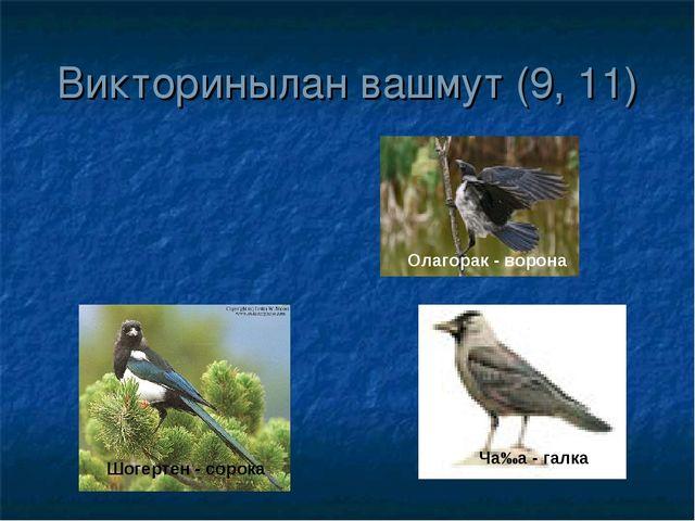 Викторинылан вашмут (9, 11) Олагорак - ворона Ча‰а - галка Шогертен - сорока