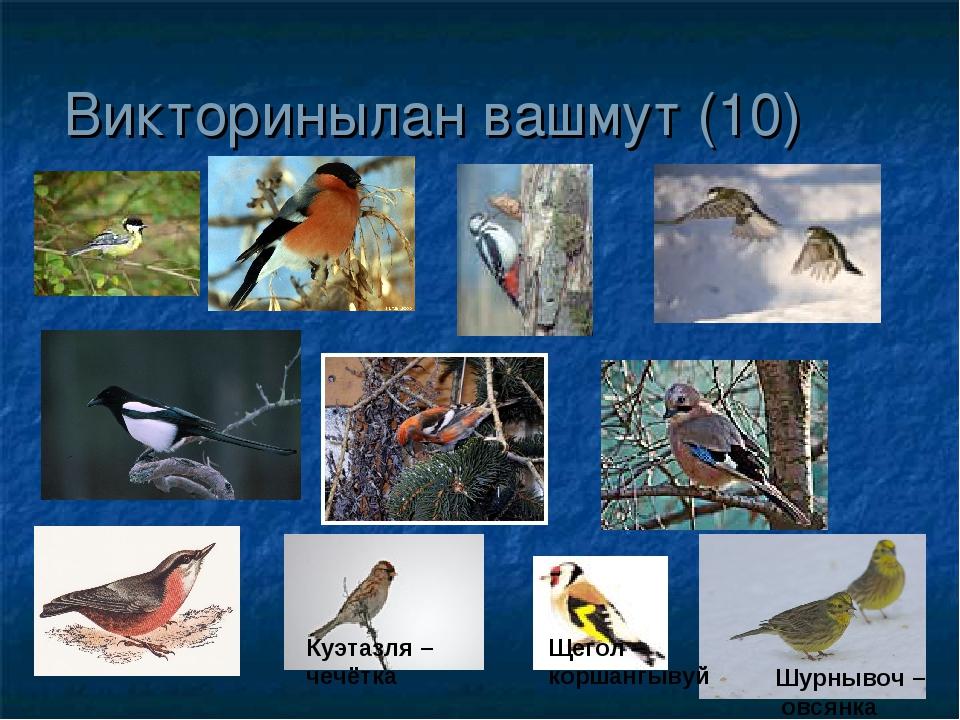 Викторинылан вашмут (10) Куэтазля – чечётка Щегол – коршангывуй Шурнывоч – ов...