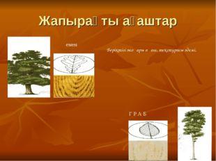 Жапырақты ағаштар емен Г Р А Б Беріктігі жоғары ағаш, текстурасы әдемі,