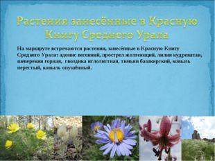На маршруте встречаются растения, занесённые в Красную Книгу Среднего Урала: