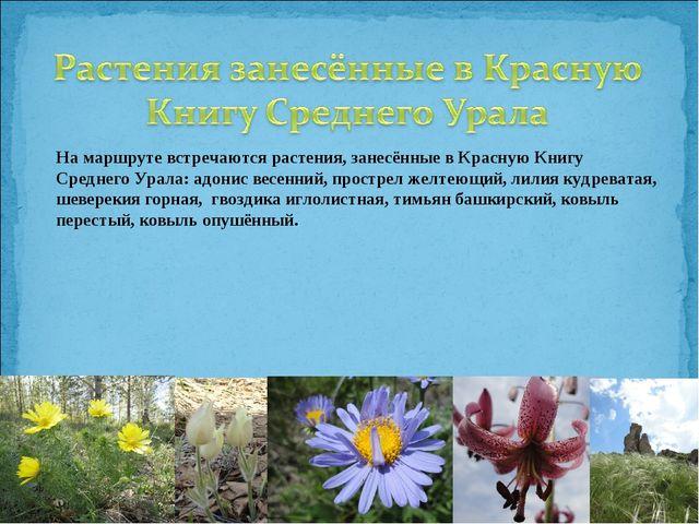 На маршруте встречаются растения, занесённые в Красную Книгу Среднего Урала:...