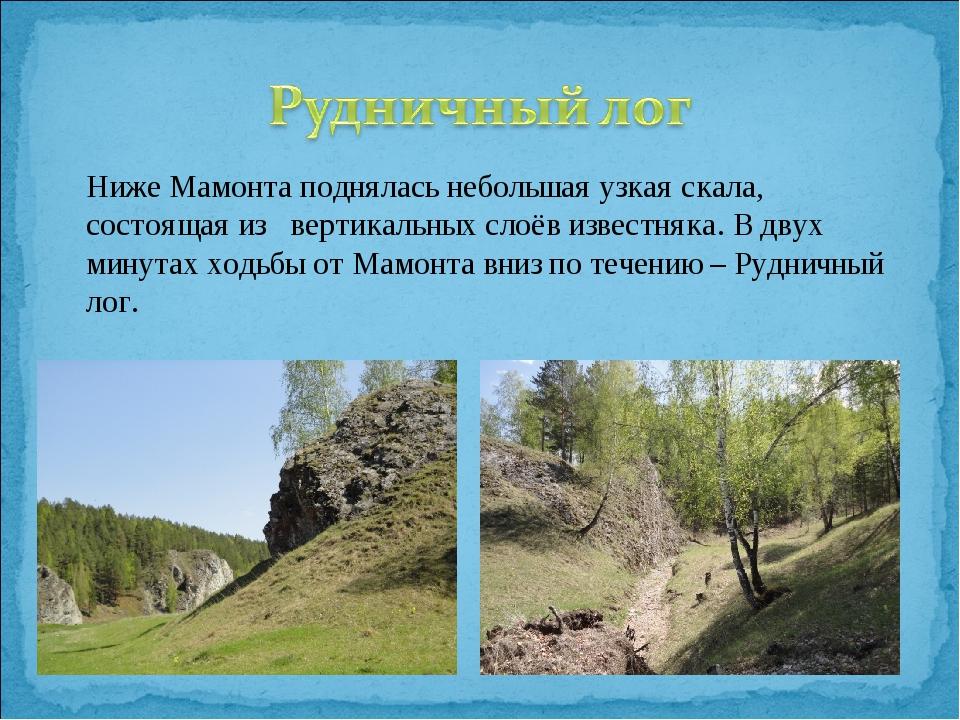 Ниже Мамонта поднялась небольшая узкая скала, состоящая из вертикальных слоё...