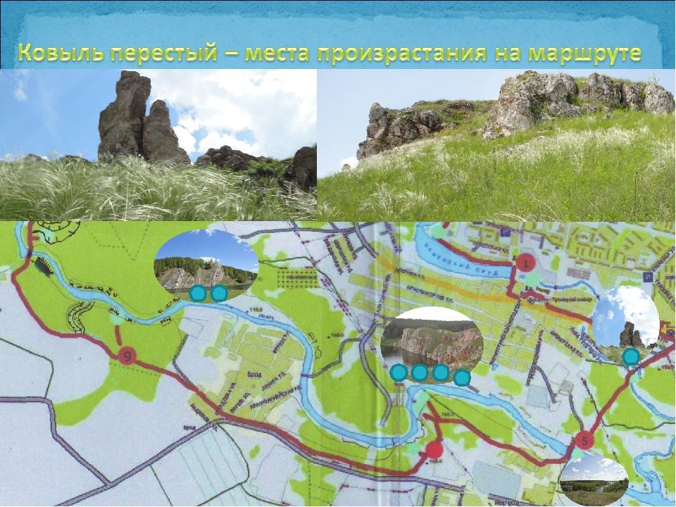Ковыль перестый На маршруте встречается: Богатырёк, Три пещеры, Раструс, Март...