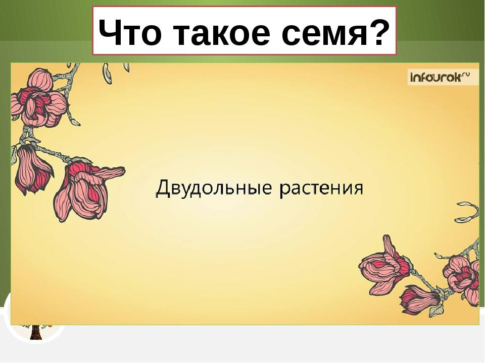 Что такое семя?