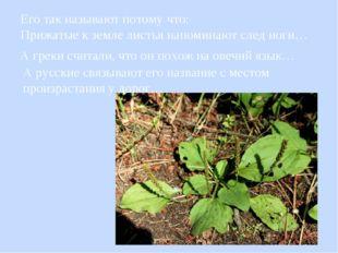Его так называют потому что: Прижатые к земле листья напоминают след ноги… А