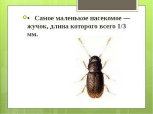 • Самое маленькое насекомое — жучок, длина которого всего 1/3 мм.
