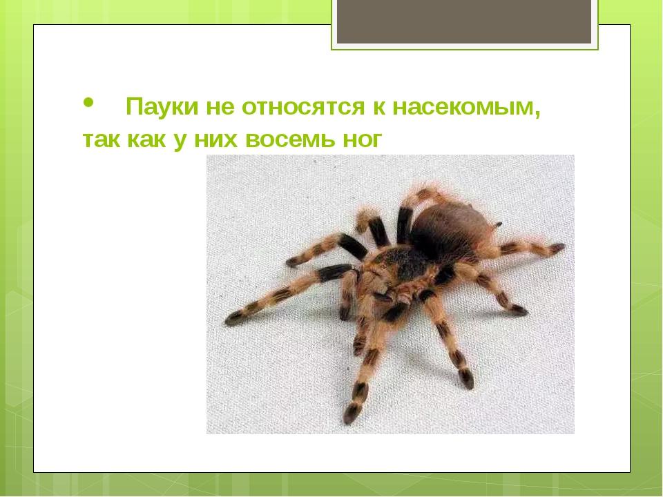• Пауки не относятся к насекомым, так как у них восемь ног