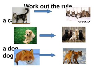 Work out the rule a cat cats a dog dogs a fox foxes