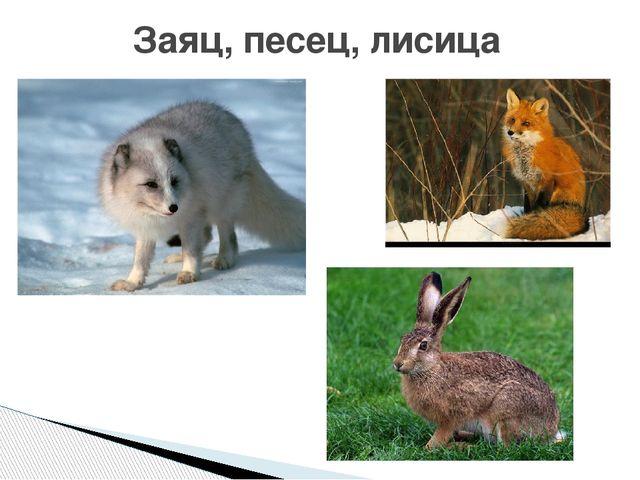 Заяц, песец, лисица