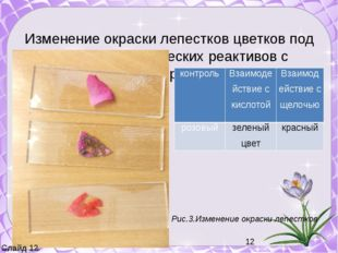 Изменение окраски лепестков цветков под действием химических реактивов с исп
