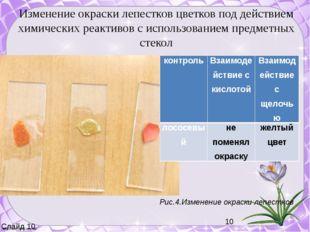 Рис.4.Изменение окраски лепестков Изменение окраски лепестков цветков под де