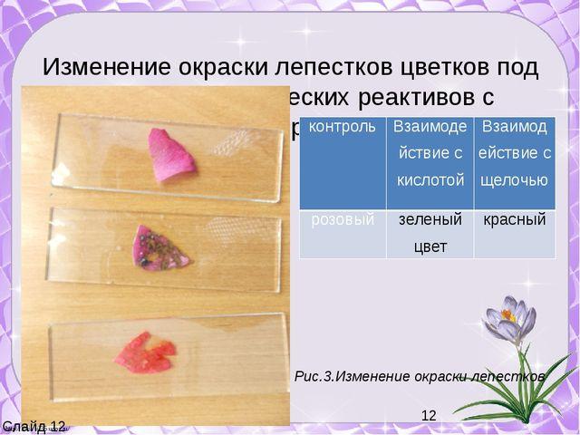 Изменение окраски лепестков цветков под действием химических реактивов с исп...