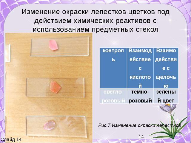 Изменение окраски лепестков цветков под действием химических реактивов с испо...