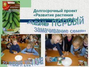 Долгосрочный проект «Развитие растения из семени на примере огурца»