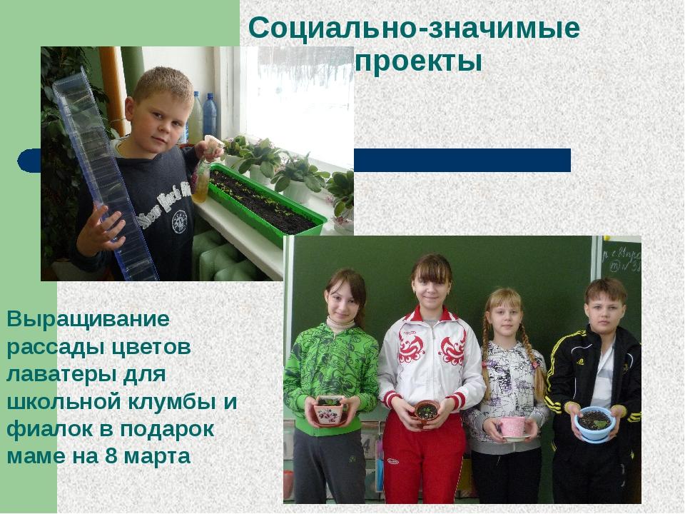 Социально-значимые проекты Выращивание рассады цветов лаватеры для школьной к...