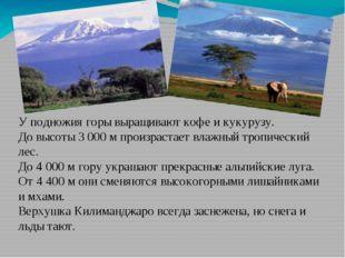У подножия горы выращивают кофе и кукурузу. До высоты 3 000 м произрастает вл