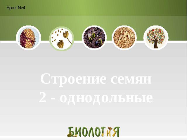 Строение семян 2 - однодольные Урок №4