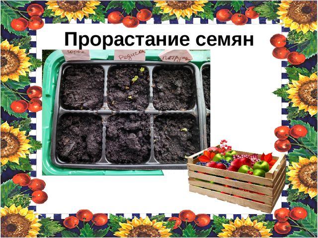 Прорастание семян