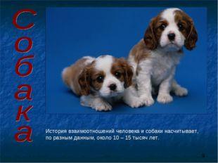История взаимоотношений человека и собаки насчитывает, по разным данным, окол
