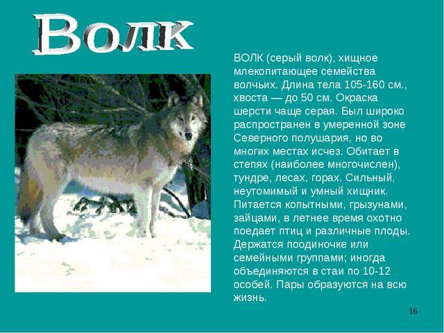 ВОЛК (серый волк), хищное млекопитающее семейства волчьих. Длина тела 105-160...