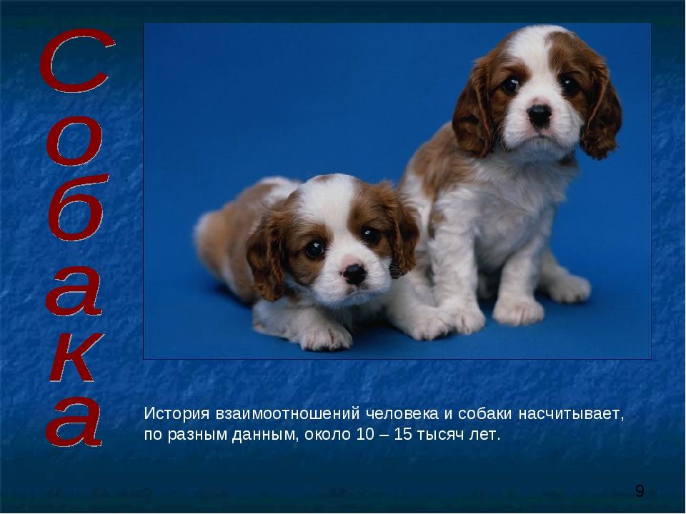 История взаимоотношений человека и собаки насчитывает, по разным данным, окол...
