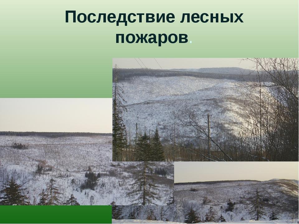 Последствие лесных пожаров.