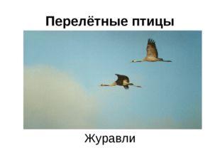 Перелётные птицы Журавли