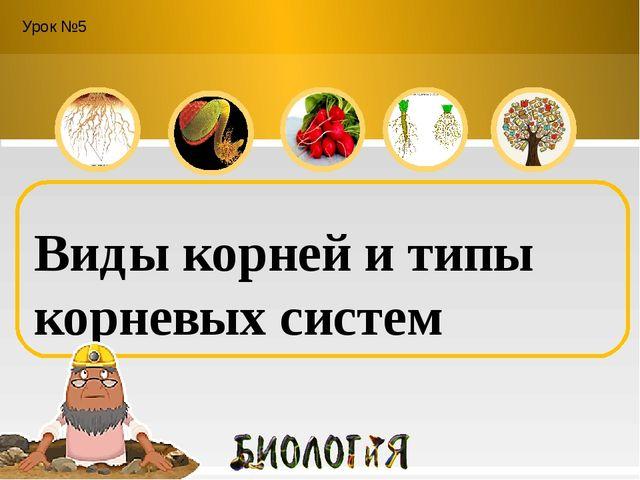 Урок №5 Виды корней и типы корневых систем