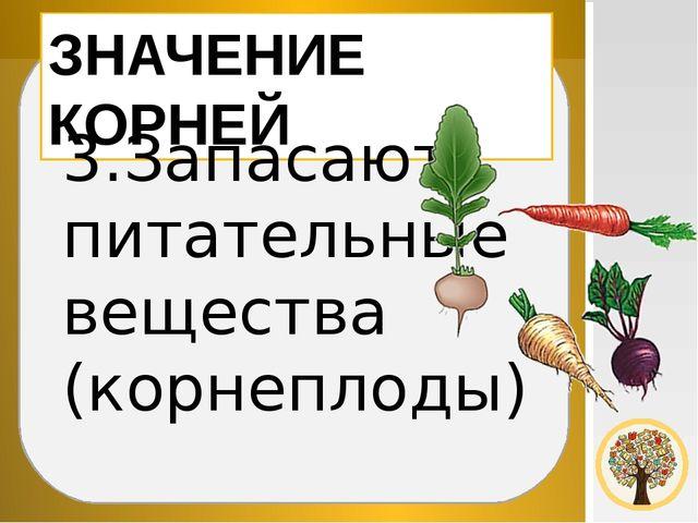 ЗНАЧЕНИЕ КОРНЕЙ 3.Запасают питательные вещества (корнеплоды)